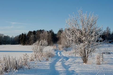 suecia-invierno.jpg