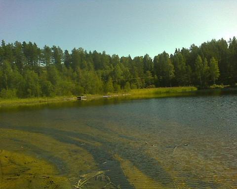 bosque-en-suecia.jpg