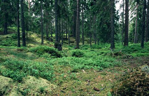 bosque-sueco.jpg